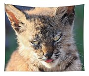Young Bobcat 04 Tapestry
