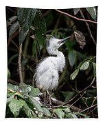 Young Egret Costa Rica Tapestry
