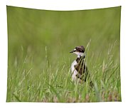 Young Killdeer In Grass Tapestry