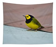 Young Male Hooded Warbler 1 Tapestry