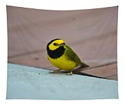Young Male Hooded Warbler 2 Tapestry