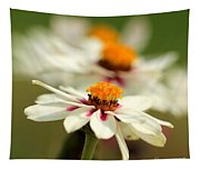 Zinnia Named Zahara Starlight Rose Tapestry