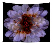 Zinnia On Black Tapestry