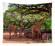 Zoo Giraffes And Zebras Tapestry
