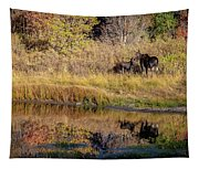 Moose At Green Pond Tapestry