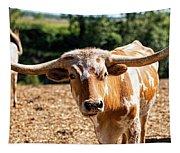 Longhorn Bull In The Paddock Tapestry