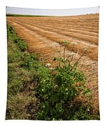 Field With Brown Cut Flax In Rows Drying In The Sun Tapestry
