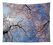 Low Angle View Of Cherry Blossom Trees Tapestry