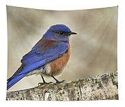 Western Bluebird Tapestry