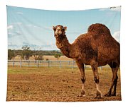 Large Beautiful Camel Tapestry