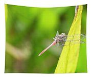 Small Beautiful Dragonfly Tapestry