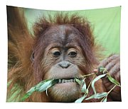 A Close Portrait Of A Young Orangutan Eating Leaves Tapestry