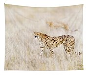 A Pair Of Cheetahs Move Steathily Through The Long Grass Of The  Tapestry