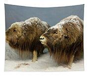 A Pair Of Musk Oxen, International Wildlife Museum, Tucson, Ariz Tapestry