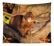 Adorable Mink Tapestry