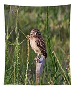 Adult Burrowing Owl Tapestry