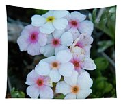 Alpine Rockjasmine Up Close Tapestry