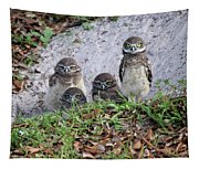 Baby Burrowing Owls Posing Tapestry