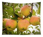 Backyard Garden Series - Apples In Apple Tree Tapestry