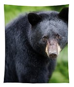 Bear Stare Tapestry