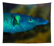 Bird Wrasse Tapestry