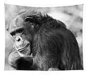 Black And White Chimp Tapestry