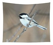 Black-capped Chickadee In Spring Tapestry