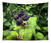 Black Raspberries  Tapestry