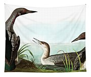 Black Throated Diver, Colymbus Arcticus By Audubon Tapestry