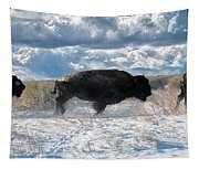 Buffalo Charge.  Bison Running, Ground Shaking When They Trampled Through Arsenal Wildlife Refuge Tapestry