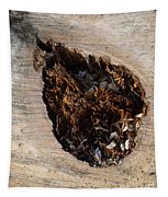 Canal Stumps-018 Tapestry