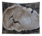 Canal Stumps-058 Tapestry