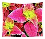 Coleus Colorfulius Tapestry