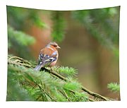 Common Chaffinch Fringilla Coelebs Tapestry