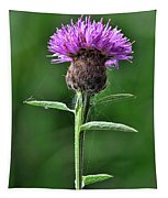 Common Knapweed 1 Tapestry