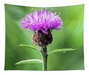 Common Knapweed 2 Tapestry