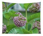Common Milkweed Tapestry