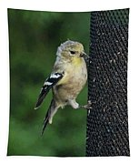 Cute Goldfinch At Feeder Tapestry