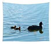 Eurasian Coot And Offspring In Ria Formosa. Algarve, Portugal Tapestry