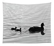 Eurasian Coot And Offspring In Ria Formosa, Portugal. Monochrome Tapestry