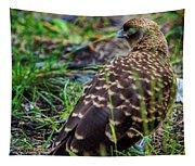 Falcon Chimango Caracara, Tierra Del Fuego National Park, Ushuaia, Argentina Tapestry