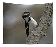 Female Downy Woodpecker Tapestry