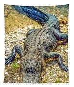Florida Gator 2 Tapestry