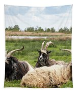 Goats  Tapestry by Anjo Ten Kate
