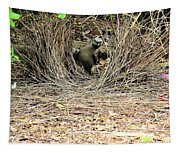 Great Bowerbird With Nut Tapestry