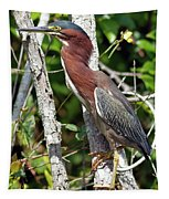 Green Heron In The Glades Tapestry