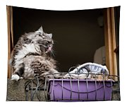 Grey Long Haired Cat Sitting On A Window Sill Tapestry