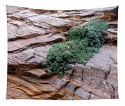 Growing From The Rock Terrain In Zion  Tapestry