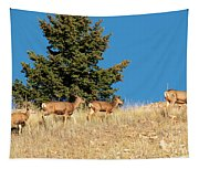 Herd Of Colorado Deer Tapestry