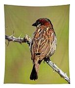 House Sparrow V1818 Tapestry